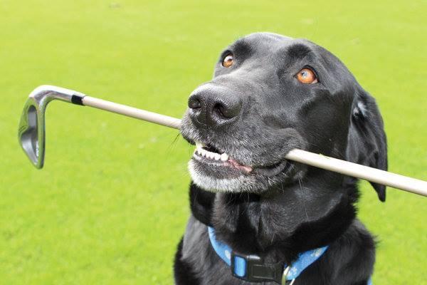 Play Golf! Help Homeless Dogs!